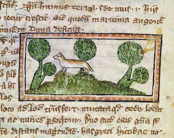 MS 379 f.12v A weasel standing on green hummocks, detail from a Bestiary, English, 14th century (vellum)