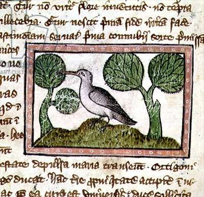 MS 379 f.24v A grey bird on a hillock, detail from a Bestiary, English, 14th century (vellum)