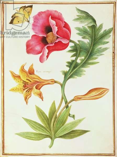 PD.109-1973.f45 Poppy and an Orange Lily (w/c on vellum)