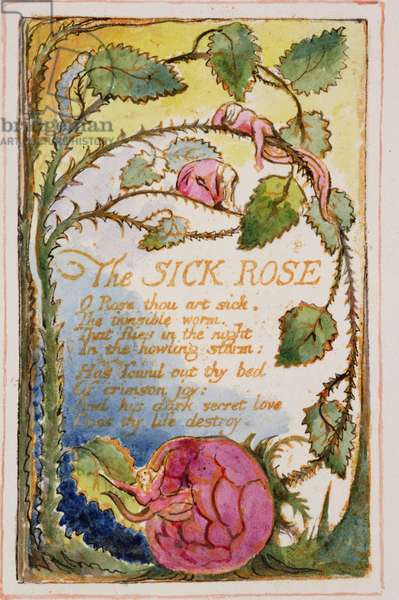 P.125-19503.pt39 The Sick Rose: plate 39 from Songs of Innocence and of Experience (copy AA) c.1815-26 (etching, ink and w/c)