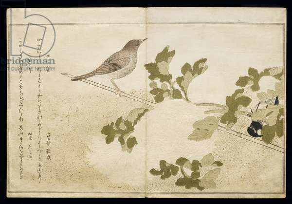 P.332-1946 Vol.2 f.2 Manchurian Great Tit and a Robin, from an album 'Birds compared in Humorous Songs', 1791 (colour woodblock print)