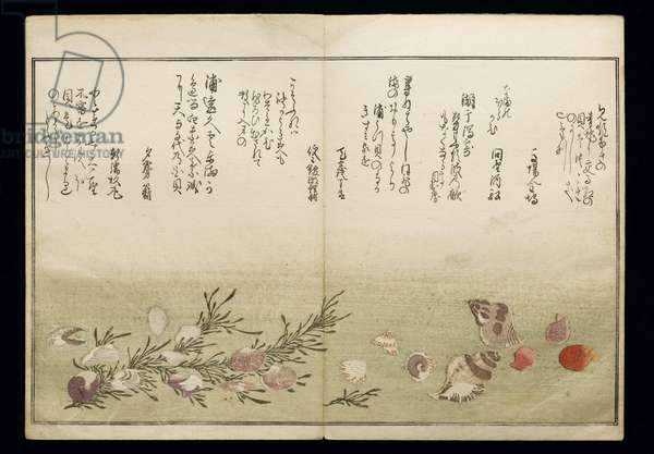 Shiohi no tsuto (Gifts from the Ebb Tide), known as the 'Shell Book', 1789 (colour woodblock print)