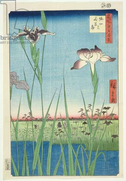 BM.Cat.440 Irises at Horikin, No.56 in the series '100 Views of Edo', ('Meisho Edo hyakkei'), pub. 1857, (colour woodblock print)