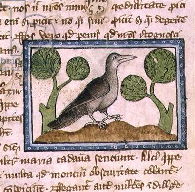 MS 379 f.15r A large grey bird, detail from a Bestiary, English, 14th century (vellum)