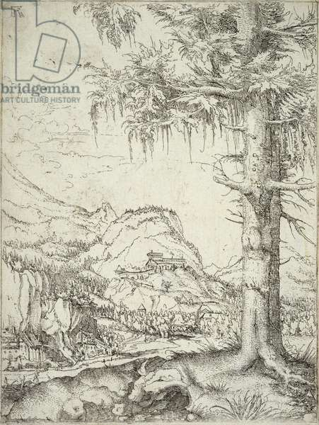 The Large Spruce, c.1520 (etching)