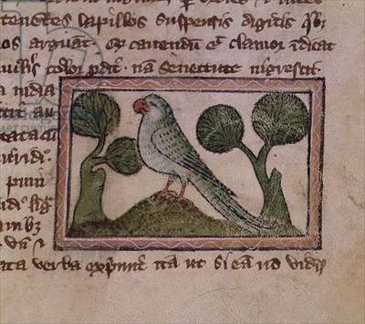 MS 379 f.16r A green parrot, detail from a Bestiary, English, 14th century (vellum)