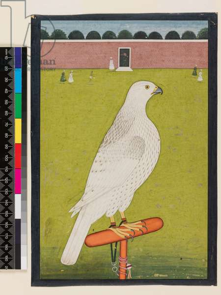 White Falcon on a red Perch in a Large Courtyard, Lahore School, c.1830 (full colour on paper)