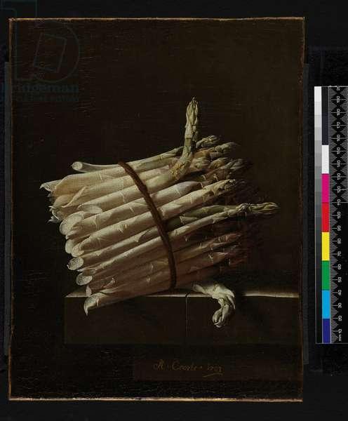 Bunch of Asparagus, 1703 (oil on canvas)