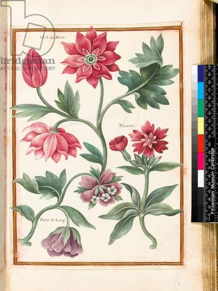 Stylised Study of Flowers by Nicolas Robert (1614-85)