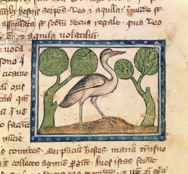 MS 379 f.17r A stork, detail from a Bestiary, English, 14th century (vellum)