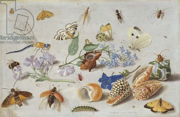 Butterflies and other Insects, 1661 (oil on copper)