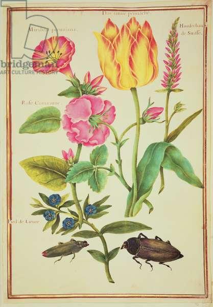 PD.109-1973.f23 Flower Studies (w/c on vellum)