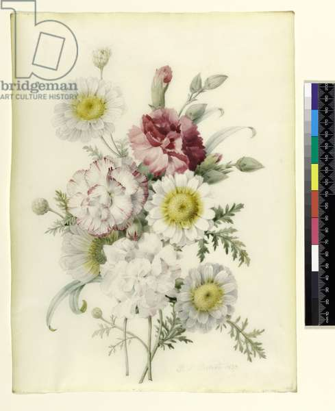 Bunch of Mixed Carnations and White Marigolds, 1839 (pencil and w/c on vellum)