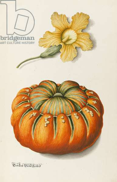 Courgette and a Pumpkin (pen & ink with w/c and bodycolour on paper)