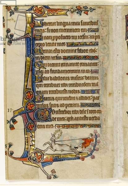 MS 1-2005, fol. 193v: A Stag Lassoed by a Man, marginal decoration from the Macclesfield Psalter, Use of Sarum, East Anglia, c.1330 (vellum)