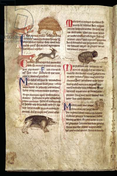 Dog Chasing a Porcupine, Fox Chasing a Rabbit, Cat Chasing a Mouse etc., English Bestiary, early 13th century (vellum)