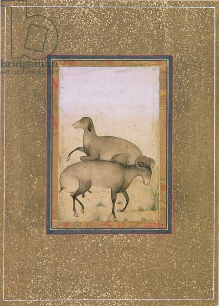 PD.191-1948 Ram and ewe in a meadow, Mughal school, late 18th century (gouache on paper)