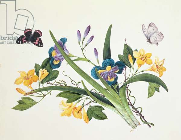 Blue Iris and Insects (w/c on paper)
