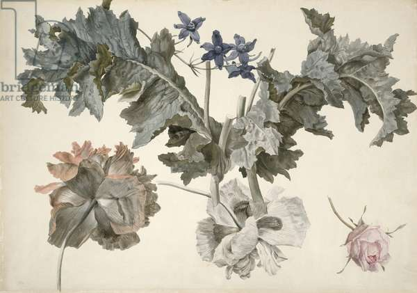 PD.424-1973 Double-flowered opium poppies, poppy leaves, delphinium and a rosebud (w/c)