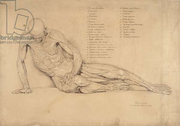 An Ecorche Study of the Dying Gaul, 1840 (pen and ink on paper)