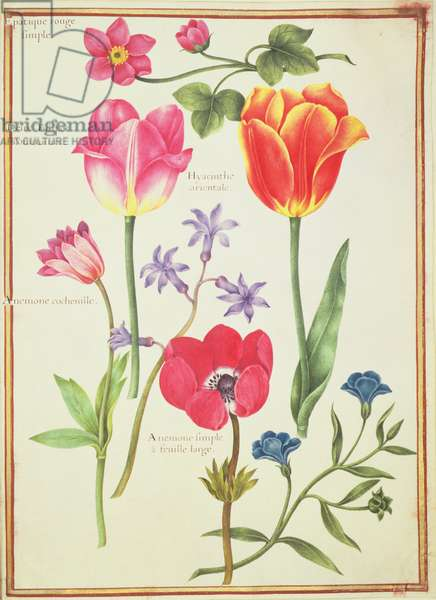 PD.109-1973.f40 Flower Studies (w/c on vellum)