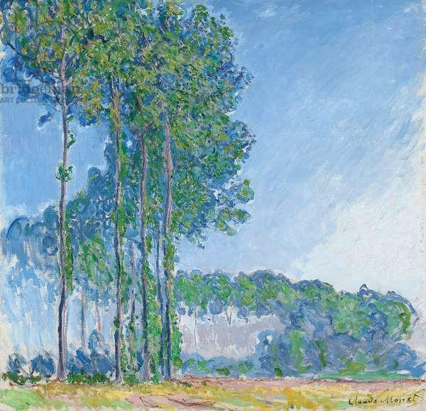 Poplars, 1891 (oil on canvas)