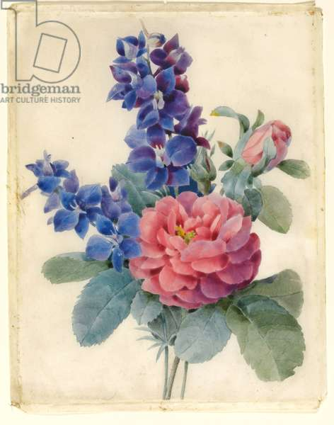 Flowers, Roses and Larkspur (w/c & bodycolour on vellum)