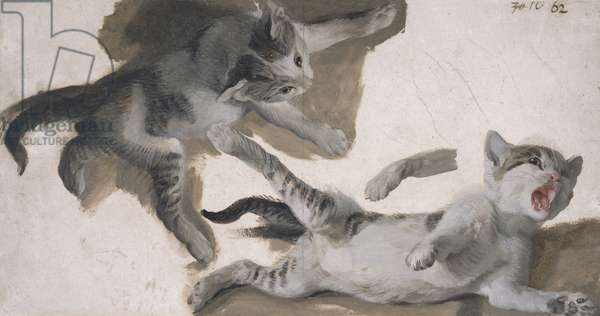Sketches of a Kitten (oil on paper)