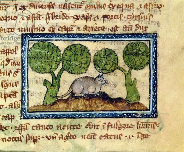 MS 379 f.12r A cat crouching on a mound of earth, detail from a Bestiary, English, 14th century (vellum)