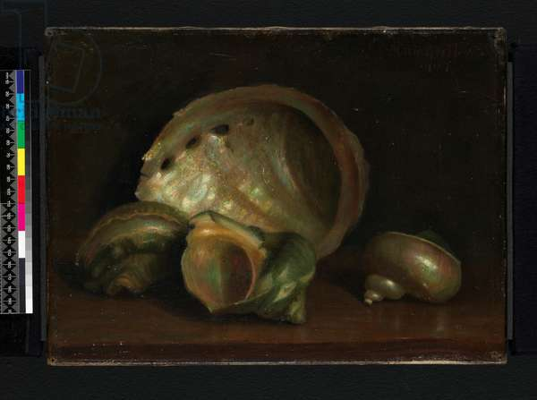 Seashells, 1907 (oil on canvas)