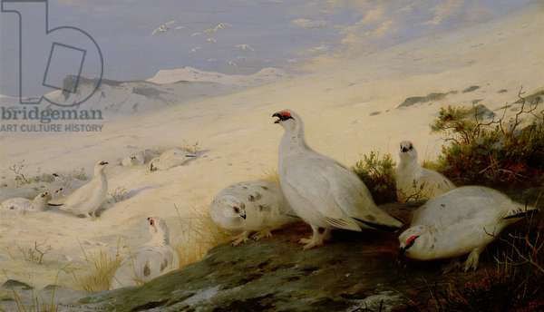 Ptarmigan, 1903 (oil on canvas)