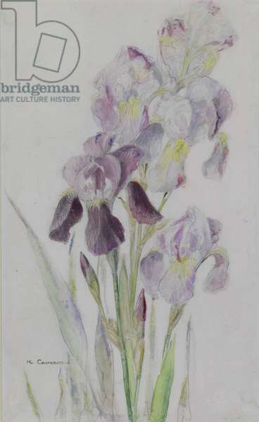 Irises (wash & pencil on paper)