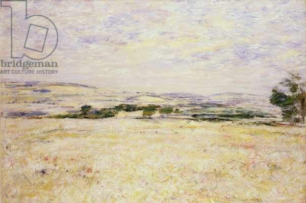 Barley Field, Sandy Dean, 1905 (oil on canvas)