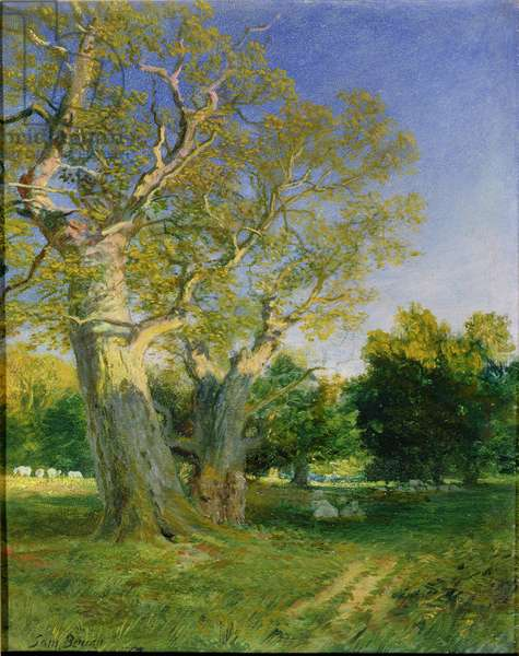 Summer Evening, Cadzow (oil on board)