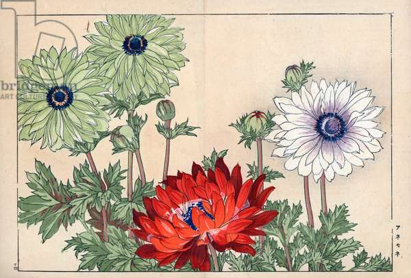 """Variety of anemone, red, green and white. Anemone varieties. Handcoloured woodblock print from Konan Tanigami's """""""" Seiyou Sokazufu"""""""" (Pictorial Album of Western Plants and Flowers: Spring), Unsodo, Kyoto, 1917. Tanigami (1879-1928) depicted 125 varieties of garden plants through the four seasons."""