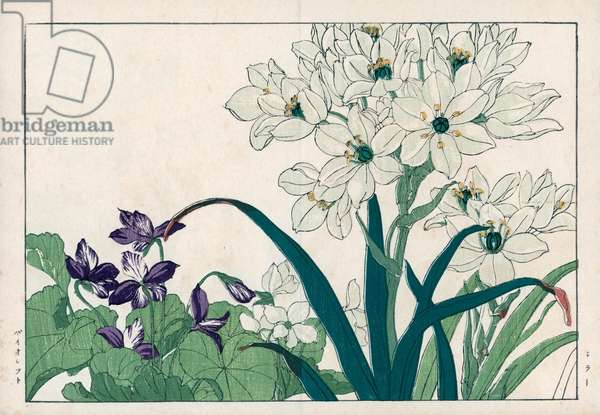 """Seals, white and fragrant purple. Squill, Scilla species, and violet, Viola odorata. Handcoloured woodblock print from Konan Tanigami's """""""" Seiyou Sokazufu"""""""" (Pictorial Album of Western Plants and Flowers: Spring), Unsodo, Kyoto, 1917. Tanigami (1879-1928) depicted 125 varieties of garden plants through the four seasons."""