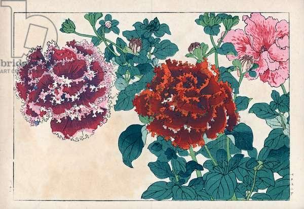"Varietes of hybrid petunias. Petunia hybrids. Handcoloured woodblock print from Konan Tanigami's """" Seiyou Sokazufu"""" (Pictorial Album of Western Plants and Flowers: Summer), Unsodo, Kyoto, 1917. Tanigami (1879-1928) depicted 125 varieties of garden plants through the four seasons."