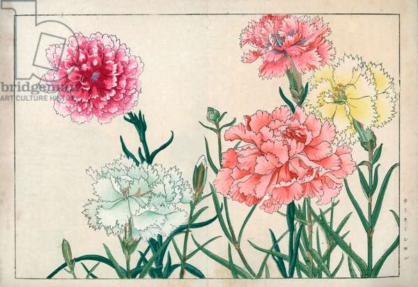"""Variety of common carnation or carnation of florists or giroflee carnation. Carnations, Dianthus caryophyllus. Handcoloured woodblock print from Konan Tanigami's """""""" Seiyou Sokazufu"""""""" (Pictorial Album of Western Plants and Flowers: Summer), Unsodo, Kyoto, 1917. Tanigami (1879-1928) depicted 125 varieties of garden plants through the four seasons."""