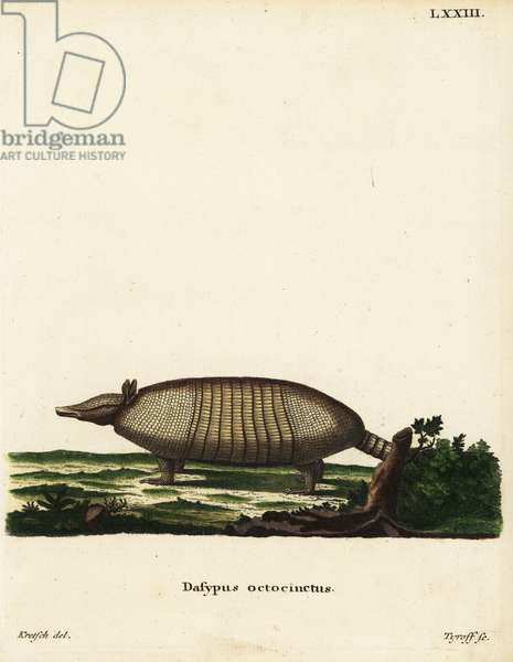 Large hairy armadillo, Chaetophractus villosus. Dasypus octocinctus Linn. Handcoloured copperplate engraving by Tyroff after an illustration by H.D. Kretsch from Johann Christian Daniel Schreber's Animal Illustrations after Nature, or Schreber's Fantastic Animals, Erlangen, Germany, 1775.