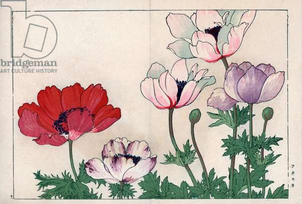"""Variety of anemones, red and white and purple pink. Anemone varieties. Handcoloured woodblock print from Konan Tanigami's """""""" Seiyou Sokazufu"""""""" (Pictorial Album of Western Plants and Flowers: Spring), Unsodo, Kyoto, 1917. Tanigami (1879-1928) depicted 125 varieties of garden plants through the four seasons."""