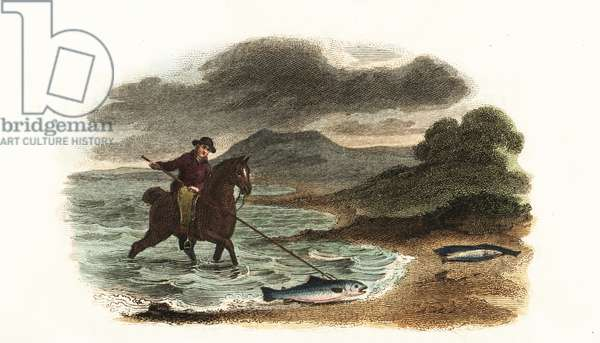 English fisherman Graham hunting salmon in the shallows mounted on horseback with a 5-meter 3-prong spear
