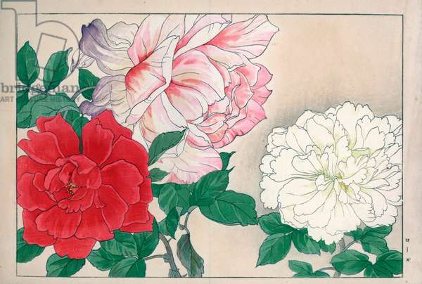 """Rose varietes (red, white and pale pink colour). Roses, Rosa species. Handcoloured woodblock print from Konan Tanigami's """""""" Seiyou Sokazufu"""""""" (Pictorial Album of Western Plants and Flowers: Spring), Unsodo, Kyoto, 1917. Tanigami (1879-1928) depicted 125 varieties of garden plants through the four seasons."""