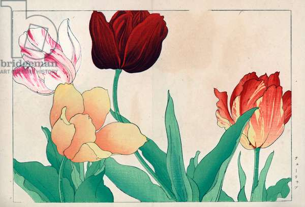 """Variety of tulips in mixed colours. Tulips, Tulipa gesneriana varieties. Handcoloured woodblock print from Konan Tanigami's """""""" Seiyou Sokazufu"""""""" (Pictorial Album of Western Plants and Flowers: Spring), Unsodo, Kyoto, 1917. Tanigami (1879-1928) depicted 125 varieties of garden plants through the four seasons."""