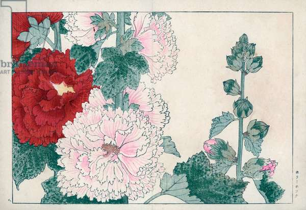 """Passerose (Passe-rose or Passe rose) or pink tremiere. Hollyhock, Alcea rosea. Handcoloured woodblock print from Konan Tanigami's """""""" Seiyou Sokazufu"""""""" (Pictorial Album of Western Plants and Flowers: Summer), Unsodo, Kyoto, 1917. Tanigami (1879-1928) depicted 125 varieties of garden plants through the four seasons."""