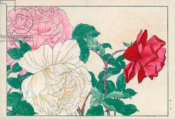 """Varieties of roses (white, pink and red color).Roses, Rosa species. Handcoloured woodblock print from Konan Tanigami's """""""" Seiyou Sokazufu"""""""" (Pictorial Album of Western Plants and Flowers: Spring), Unsodo, Kyoto, 1917. Tanigami (1879-1928) depicted 125 varieties of garden plants through the four seasons."""