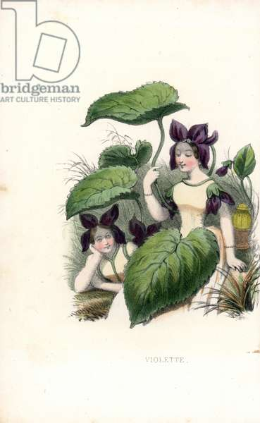 Fragrant violet - two young girls drenned with flowers - Lithography by Louis Lassalle, extracted from Les fleurs parlantes by Louise Leneveux (1800-18?) , Paris, 1848 - (Sweet violet flower fairy, Viola odorata - Handcoloured frontispiece lithograph by Lassalle from L. Leneveux, The Talking Flowers, Paris, 1848)