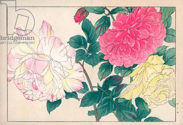 """Variety of roses (pale yellow, pink and two-tone colors). Roses, Rosa species. Handcoloured woodblock print from Konan Tanigami's """""""" Seiyou Sokazufu"""""""" (Pictorial Album of Western Plants and Flowers: Spring), Unsodo, Kyoto, 1917. Tanigami (1879-1928) depicted 125 varieties of garden plants through the four seasons."""