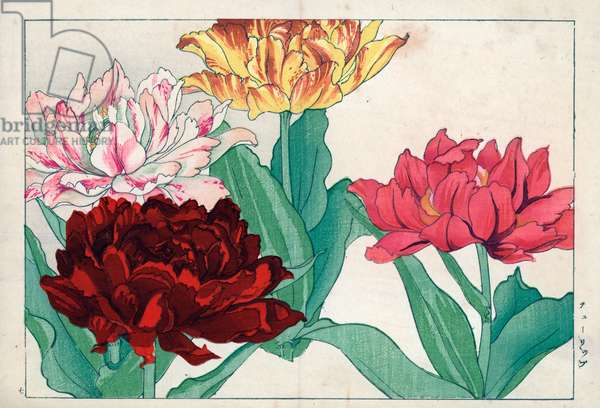 """Variety of tulips with double petal. Tulips, Tulipa gesneriana double varieties. Handcoloured woodblock print from Konan Tanigami's """""""" Seiyou Sokazufu"""""""" (Pictorial Album of Western Plants and Flowers: Spring), Unsodo, Kyoto, 1917. Tanigami (1879-1928) depicted 125 varieties of garden plants through the four seasons."""
