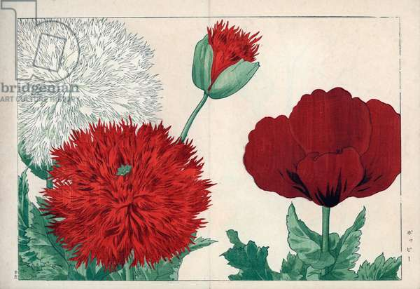 """Variety of poppies (white, red and crimson colour). Poppy varieties, Papaver species. Handcoloured woodblock print from Konan Tanigami's """""""" Seiyou Sokazufu"""""""" (Pictorial Album of Western Plants and Flowers: Spring), Unsodo, Kyoto, 1917. Tanigami (1879-1928) depicted 125 varieties of garden plants through the four seasons."""