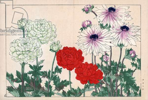 """Variety of anemones, with double petals, red, white and purple white. Anemone varieties. Handcoloured woodblock print from Konan Tanigami's """""""" Seiyou Sokazufu"""""""" (Pictorial Album of Western Plants and Flowers: Spring), Unsodo, Kyoto, 1917. Tanigami (1879-1928) depicted 125 varieties of garden plants through the four seasons."""